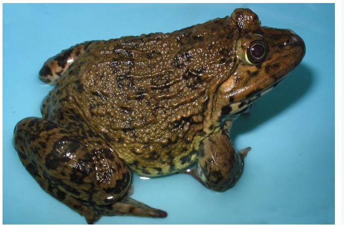 Nêu những đặc điểm cấu tạo ngoài của ếch thích nghi với đời sống dưới nước
